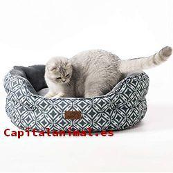 Cojines para gatos: ¿Merece la pena su compra online?
