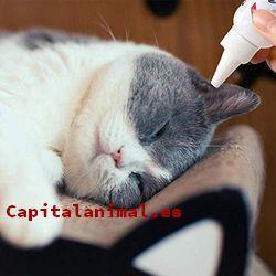 Colirios antibioticos para gatos ¿Compensa su compra?