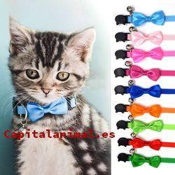 collares isabelino gatos baratos