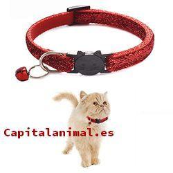 collares para gatos con nombre baratos