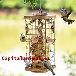 comederos para aves baratos