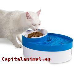 comederos para gatos baratos