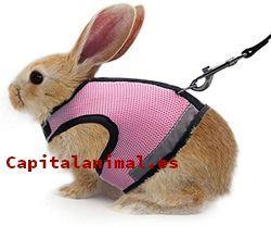 correas para conejos baratos