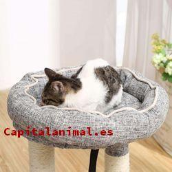 cunas para gatos baratos