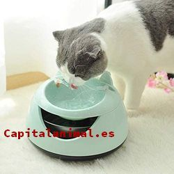 Promociones online de dispensadores de agua para gatos
