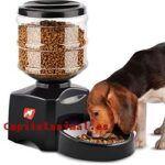 Dispensador de comida para perros: ¿Compensa comprarlos por internet?
