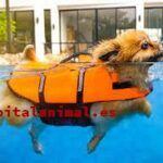 Listado de flotadores para perros para comprar – Los más vendidos