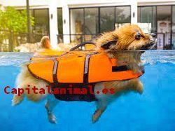 flotadores para perros baratos