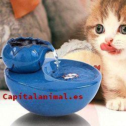 fuentes de agua para gatos baratos
