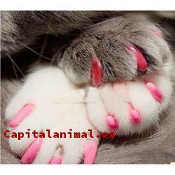 fundas para uñas de gato baratos