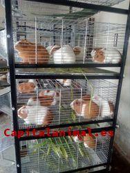 Mejores jaulas para conejos de cria - Comprar Online