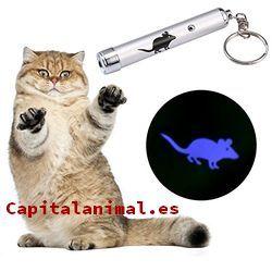 Listado de laseres para gatos para comprar desde el sofa