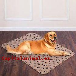 mantas para perros baratos