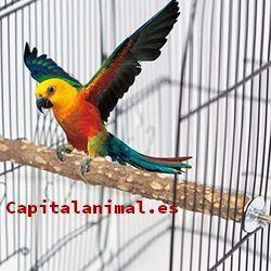 palos posaderos de aves baratos