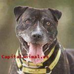 ¿Cuál es el mejor pienso para perros royal canin para el 94% de los consumidores?