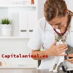 pipetas mercadona para gatos baratos