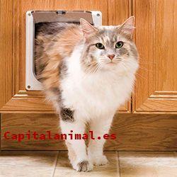 puertas para gatos baratos