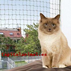 redes para gatos baratos