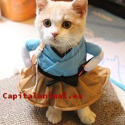 ropa para gato baratos
