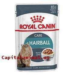 royal canin renal para gatos baratos