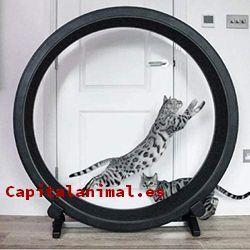 Listado de rueda de ejercicio para gatos para comprar por internet