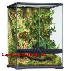 terrarios para reptiles baratos