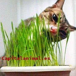Opiniones y comentarios de tomillos para gatos para comprar on-line