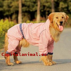 trajes para perros baratos