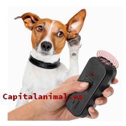 ultrasonidos para perros baratos