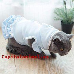 vestidos para gatos baratos