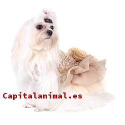 vestidos para perros baratos