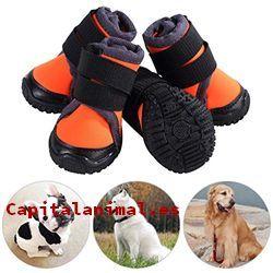 zapatillas para perros baratos