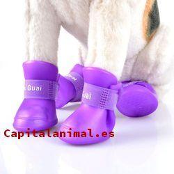 Mis 8 recomendados zapatos para gatos