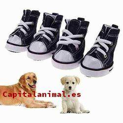 zapatos para perros baratos