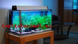 Mis 10 mejores climatizadores para acuario Online