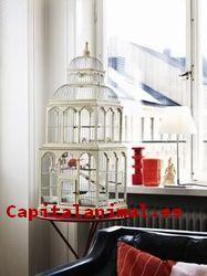 Mis 10 mejores jaulas decorativa On-line