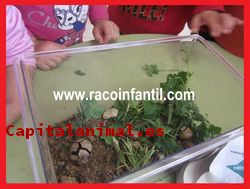 Mis 12 preferidos terrarios para caracoles