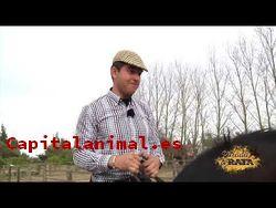 Mosqueros para caballos Inconvenientes y Ventajas