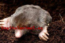 Nuestros 10 más valorados ahuyentadores de ratones