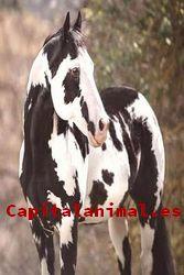 Nuestros 8 más valorados orejeras para caballos