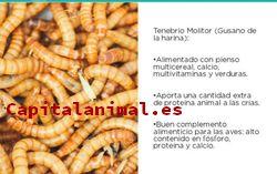 Nuestros 8 preferidos gusanos de harina