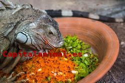 Ofertas online de terrarios para iguana