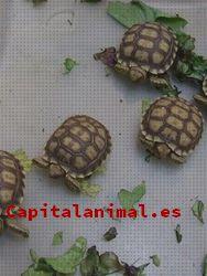 Opiniones y reviews de calcio para tortugas para adquirir on-line