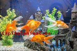 Peceras con peces - Comprar Online - Top 5