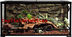 Promociones online de terrarios para erizos