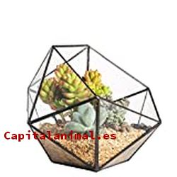 Terrarios de cristal ❤️ Mejores alternativas online